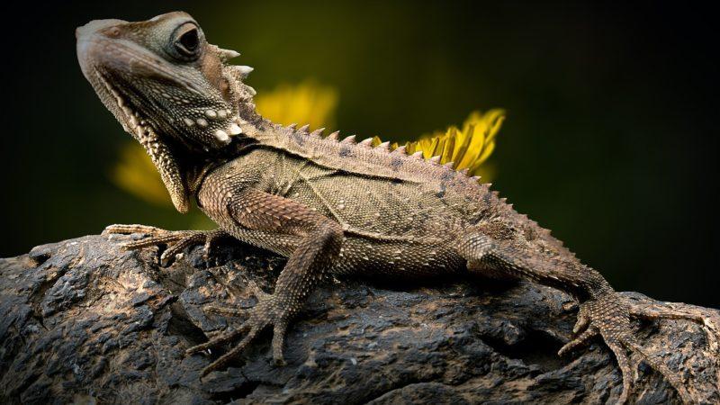 Do You Believe, Lizard Changed To Black?