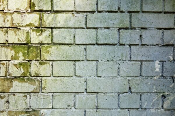 Dealing With Mold After Water Damage – Tips And Other Important Suggestions
