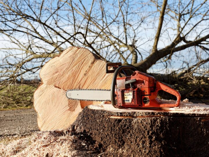 How To Easily Keep Your Trees Well Maintained – Simple Steps To Follow